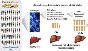 Test de risc genetic dezvoltat pentru a prezice ciroza hepatică alcoolică